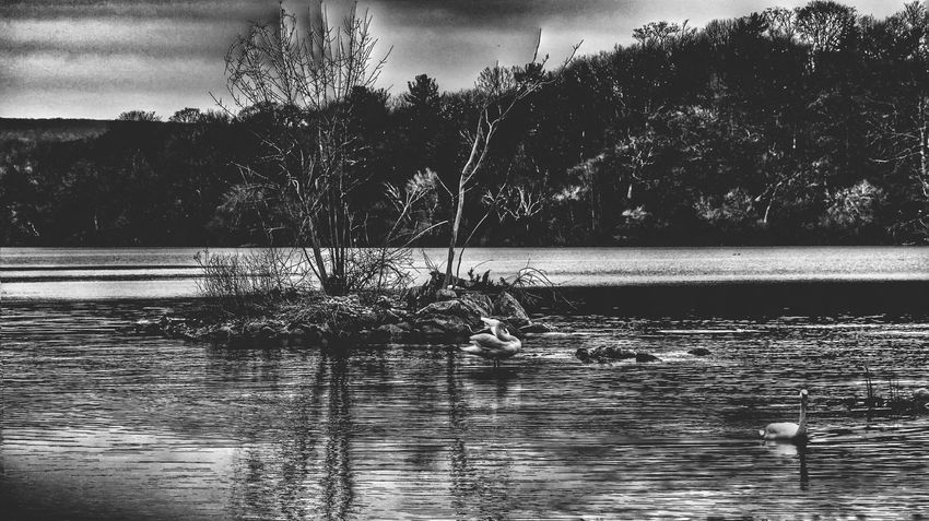 HamOnt Hdr_Collection Landscape_Collection Nature_collection Cootes Paradise Blackandwhite Sony Alpha A5000 VSCO The Great Outdoors - 2016 EyeEm Awards