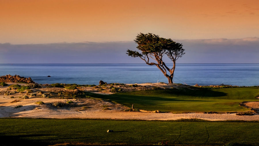 Lone cypress near Pebble Beach in the sunrise Plant Tree Sky Scenics - Nature Water Beauty In Nature Monterey Lone Tree 17-Mile Drive California USA Tranquil Scene Tranquility Land Nature Grass No People Landscape Environment Sea Non-urban Scene Field Sunset Outdoors Sunrise