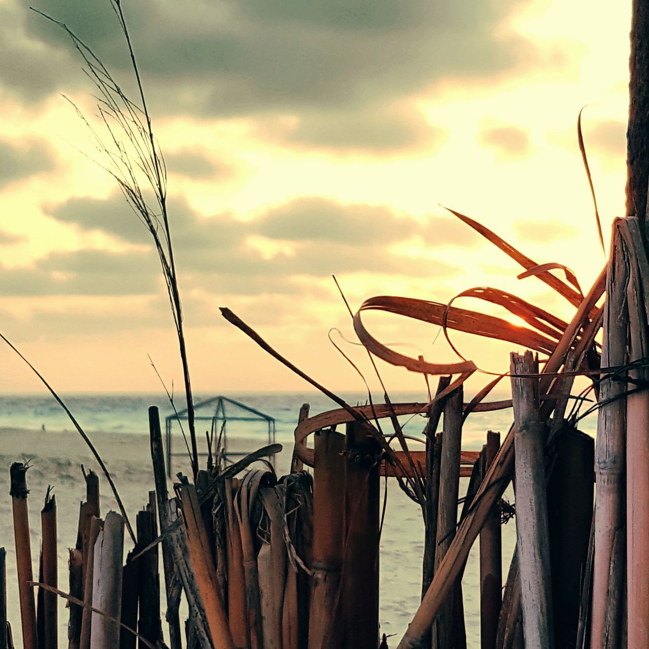 nature, sky, sunset, no people, beauty in nature, outdoors, sea, tranquil scene, scenics, cloud - sky, growth, water, drying, day, close-up
