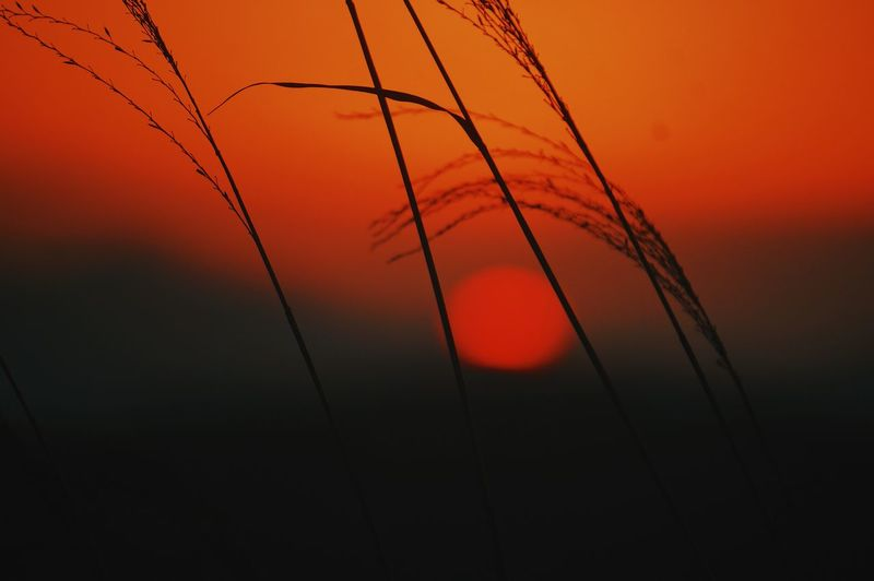 Close-up of silhouette plants against orange sunset sky