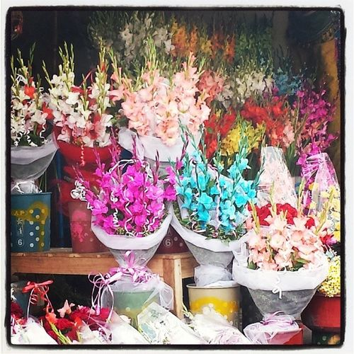 Flowers Obsession!! GorgeoudFlowers Colourfull ColoursEverywhere Lahore I♡FlowersBeautyNatureAllhamdulilah