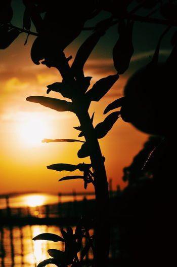 EyeEm Nature Lover EyeEm Selects EyeEm Best Shots Mood Illustration Terapy Tree Sunset Plant Part Leaf Silhouette Sunlight Sky Close-up Plant Landscape Dramatic Sky Shining Sun Idyllic Branch Romantic Sky Orange Color Moody Sky