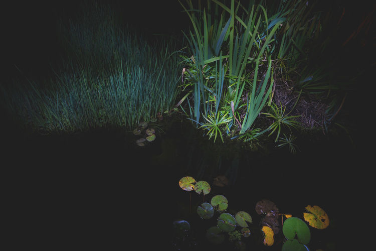 Moon Nights Sydney Darkness Grass MoonNights Nightphotography Tranquility Water Plants Waterlilies Beauty In Nature Botanical Contrasting Colors Dark Beauty Darkness And Light Haunting  Lightpaint Longtimeexposure Mysterious Nature Night Nightscape Pond Life Water