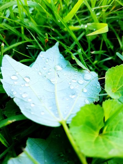 Leaf Green Color Nature Watedrops Beauty In Nature Fragility Outdoors