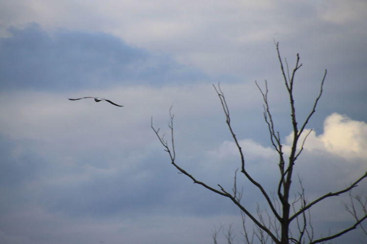 Nature Flying