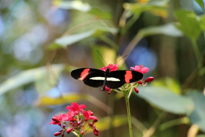 The World Is Beautiful EyeEm Nature Lover No Filter, No Edit, Just Photography Tadaa Community Animals Nature EyeEm Best Shots Traveling Butterfly Taking Photos