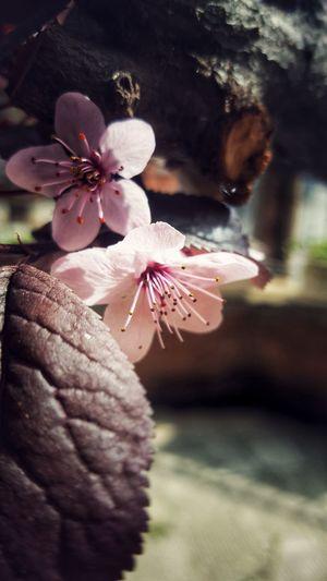 En el corazón de todos los inviernos vive una primavera palpitante, y detrás de cada noche, viene una aurora sonriente. Gibran Jalil Gibran Petals🌸 Flower Collection Flovers Nature EyeEm Nature Lover Flower Flower Collection Deseos De Primavera