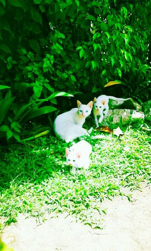 Cats White Collection White Cats Cat Photography Catgoals Cat♡ Living Things Life