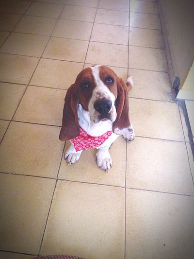 El mejor amigo/The best friend. Dog Bassethound Dogfriend