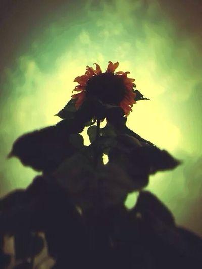 Hello World Sunflower Looking Up EyeEm Best Edits