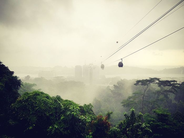 Overhead cable cars over trees against sky