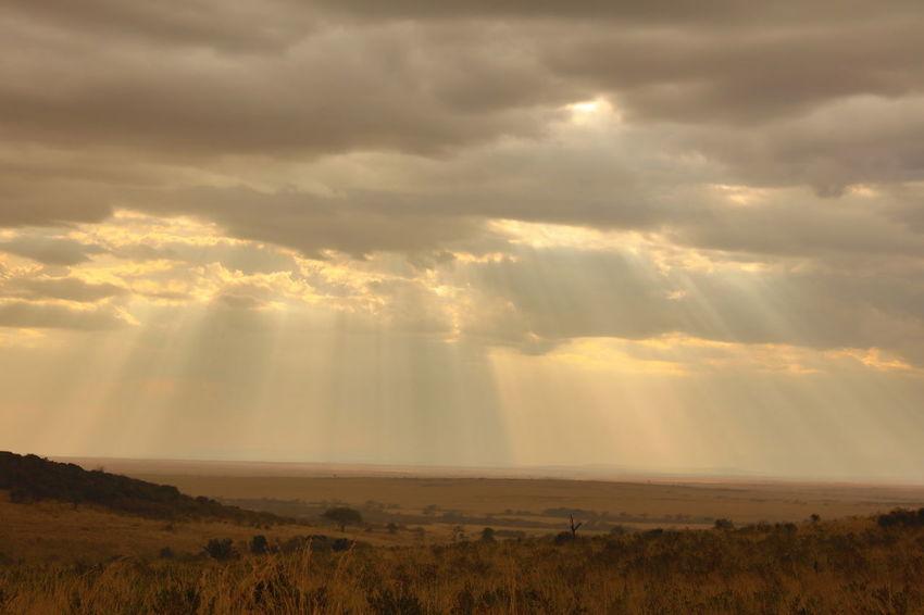 Sunset in the Maasai Mara, Kenya Dramatic Sky Endlessness Grassland Grassland Under Sunlight Landscape Maasai Mara Mara Serengeti Ecosystem Masai Mara Masai Mara National Park National Parks Kenya Overcast Sunbeam Sunset Travel Destination Kenya Weather Wide Landscapes Wildebeest Migration Wildlife Sanctuary