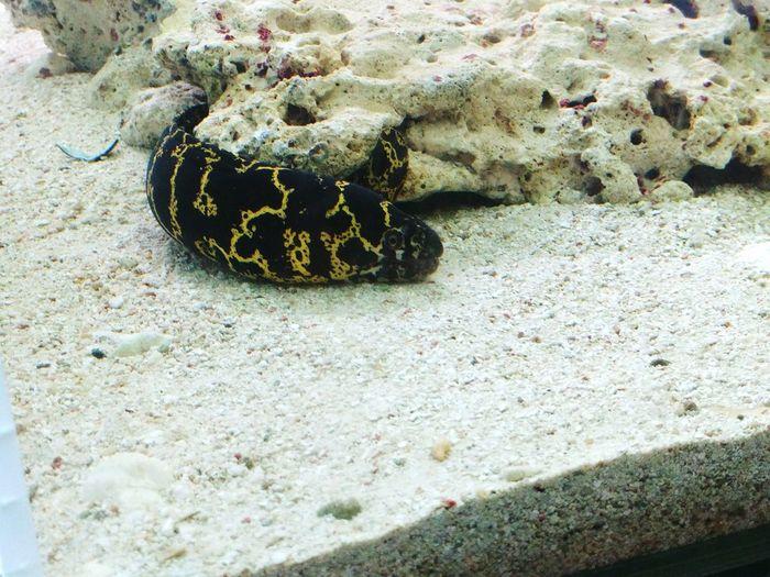 Marinelife Marine Biology Tanklife Eel Eyeemphotography Eyeemaquatic Life