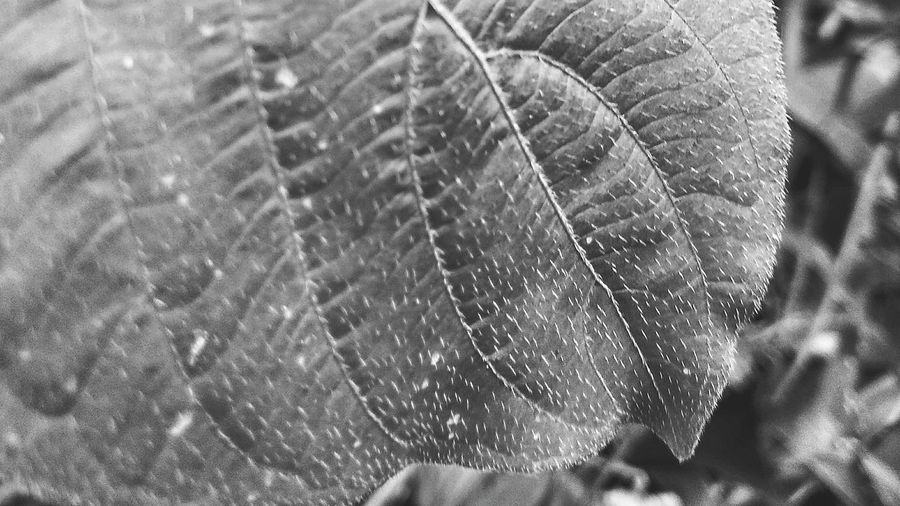 Close-up The Week On EyeEm Leaf Black & White EyeEmNewHere Nature Web No People L Day Full Frame Fragility Outdoors Water Beauty In Nature Freshness