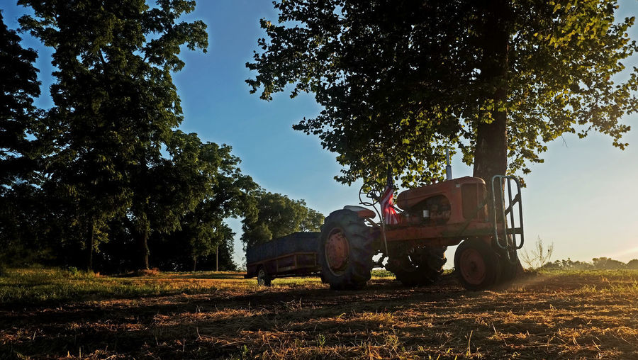 Tractor Tractor Agricultural Machinery Agriculture Animal Animal Themes Day Domestic Domestic Animals Field Growth Herbivorous Land Landscape Mammal Mode Of Transportation Nature No People Outdoors Plant Sky Sunlight Transportation Tree