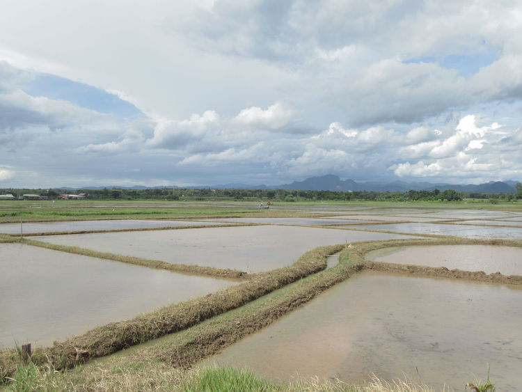 Agriculture Beauty In Nature Cloud - Sky Day Field Growth Landscape Nature No People Outdoors Rice Paddy Rural Scene Salt - Mineral Salt Basin Salt Flat Scenics Sky Tranquil Scene Tranquility Water