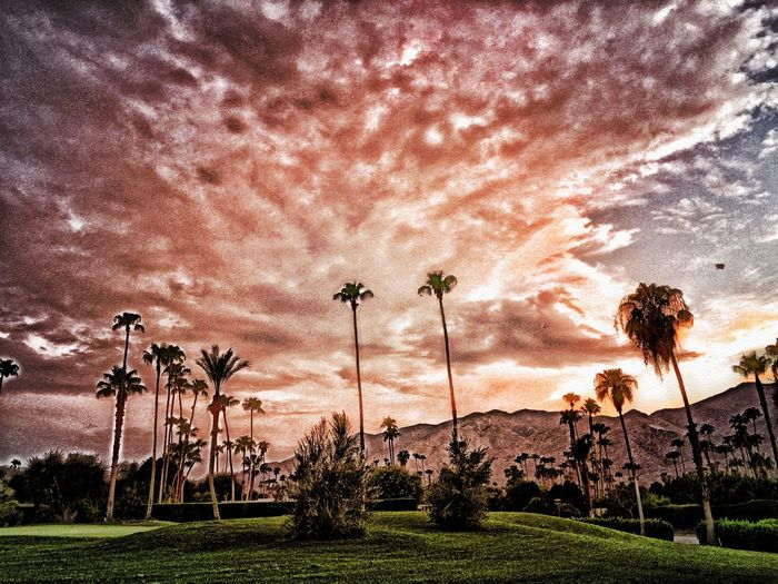 Palm Trees Palmsprings Sunset Sky Clouds And Sky HDR