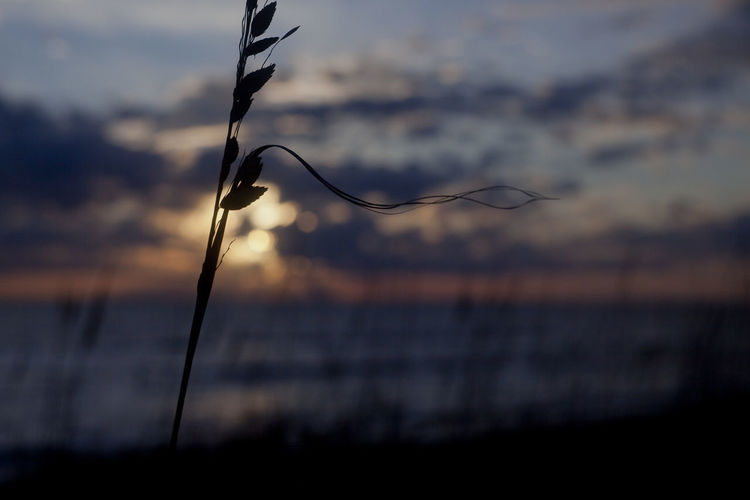 Close-up of silhouette plant against sea at sunset