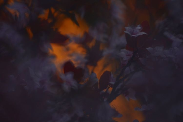 Close-up of orange flowering plant during autumn