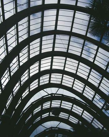 Sheffield Wintergarden Plant Plants Architecture Structure Film Filmphotography Filmisnotdead 35mmfilm 35mm