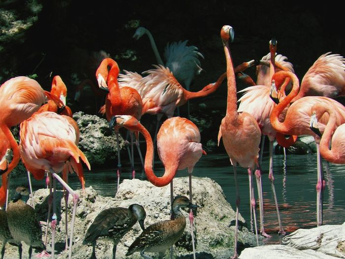 Ducks and flamingoes on rocks by pond
