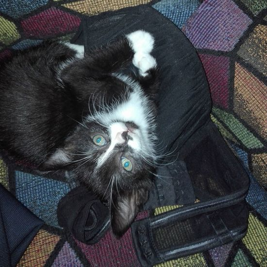 Black and White EyeEm Best Shots - Black + White Black Cat Schwarzerkater Katzen Babycat Pets Looking At Camera Close-up Cat At Home