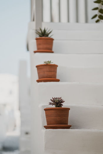 Potted plant on steps