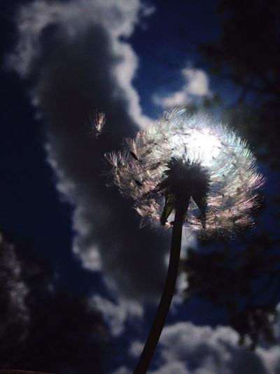 Focus Object Photography Dandelion Nature Fragility Flower Sky In Love