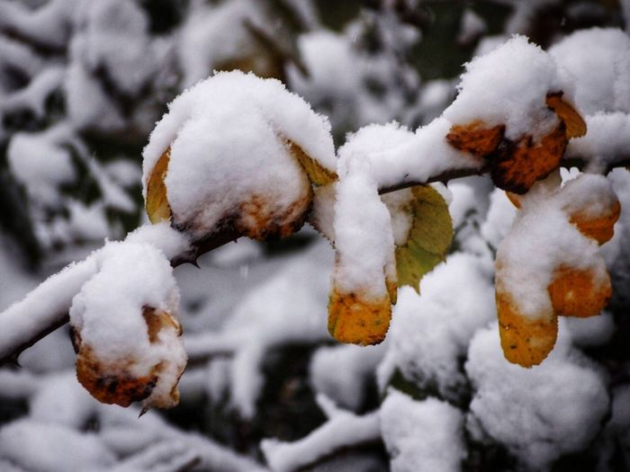 Winter Snow Cold Temperature Weather White Color Nature Frozen Beauty In Nature Outdoors No People Close-up
