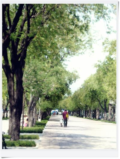 Branch Day Diminishing Perspective Footpath Full Length Green Color Growth Lifestyles Long Men Nature Park - Man Made Space Pedestrian Walkway Person Road Scenics The Way Forward Tranquil Scene Tranquility Tree Tree Trunk Treelined Walking Walkway