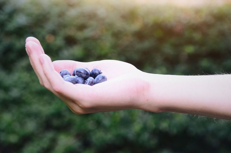 Close-up of hand holding blueberries against blurred background
