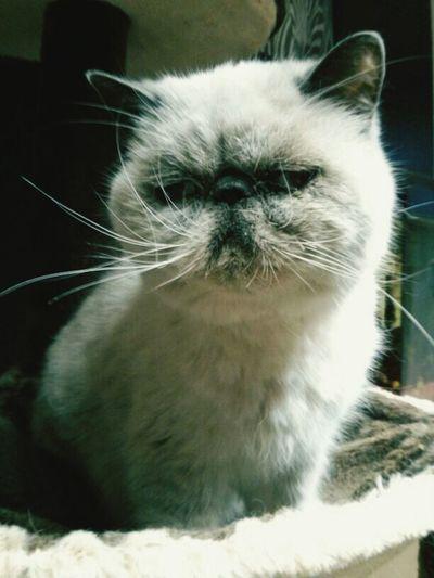 Tierheimamsee Sceptical Cat Animal