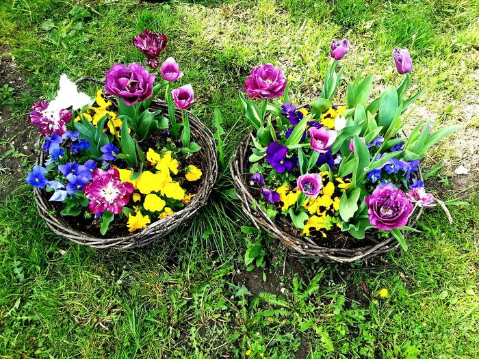 Flowers Outdoors Spring Spring Flowers Cenej Novi Sad Novisad