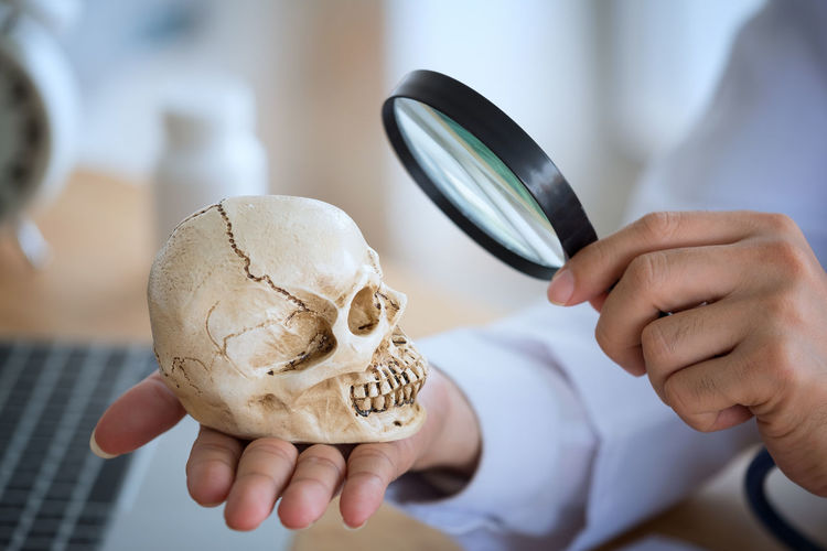 Cropped Hands Of Scientist Examining Human Skull Through Magnifying Glass