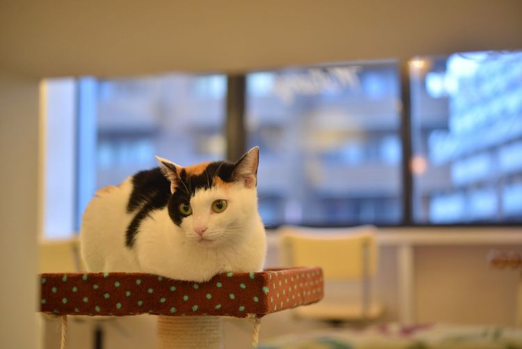 Close-Up Of Cat On Scratching Post At Home