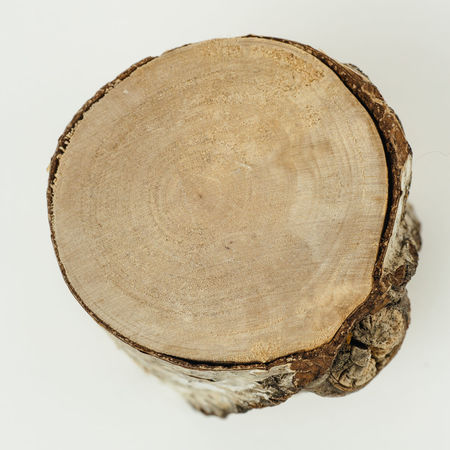 Rinde Birch Birch Tree Birke Brown Circle Close-up Contrast Cross Section Day Kontrast Macro Nahaufnahme Nature No People Outdoors Studio Shot Textured  Tree Tree Ring Tree Stump White Background Wood - Material