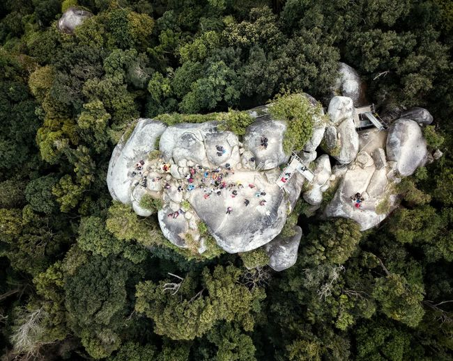 Directly above shot of rock formation in forest