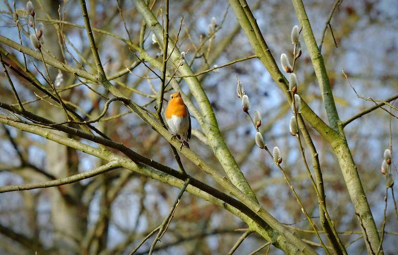 Rotkehlchen Rotkehlchen Birds🐦⛅ Birds_collection Birds Of EyeEm  Birds Vogelfotografie Perching Songbird  Robin Cardinal - Bird Animal Crest Pollen