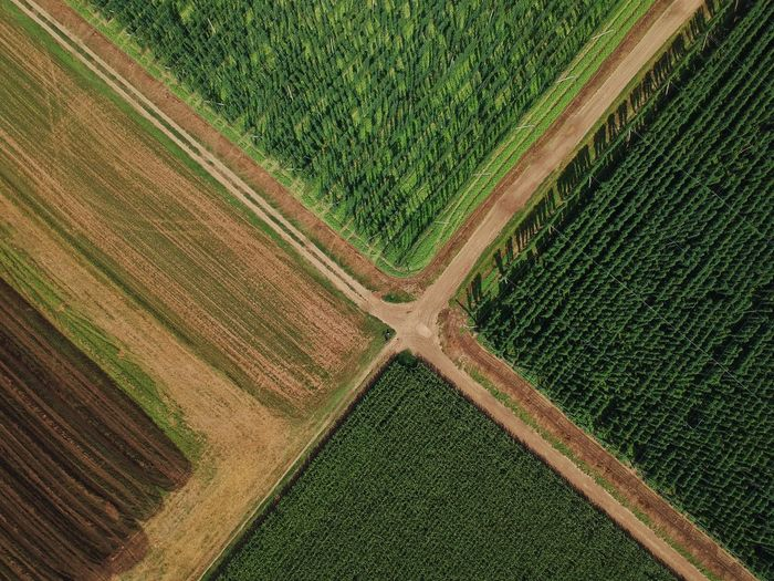 Djispark Birds Eye View Dji Road Dronephotography Drone Landscape Drone View Droneshot Lines And Shapes Droneart Djiphotography Lines Hops Slovenia Green Rural Scene Plowed Field Agriculture Aerial View Above Field Cultivated High Angle View Pattern Farm Patchwork Landscape Crop  Agricultural Equipment Cultivated Land Farmland Corn - Crop Plantation Irrigation Equipment Plough Wheat