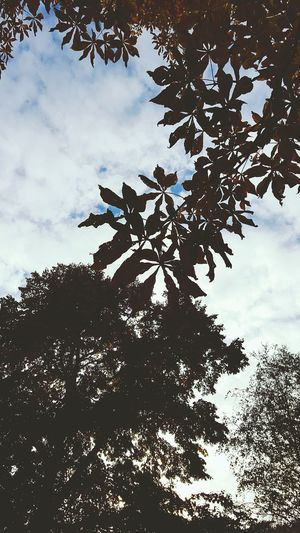 Tree leaves !! Tree Leaves Leaves Leaf 🍂 Shaft Nature Nature_collection EyeEm Nature Lover Sky Sky View Naturelovers Nature Photography