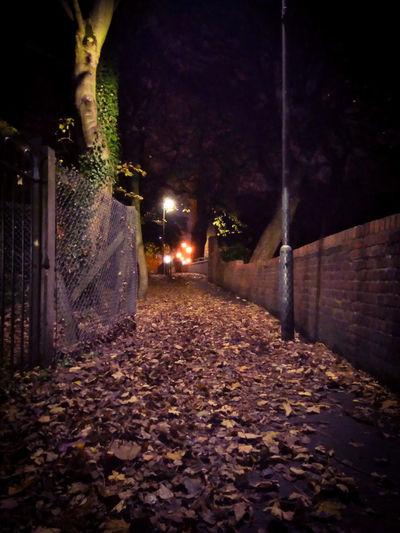 Night Illuminated Autumn No People Long Exposure Tree Nature Sky Autumn Collection Outdoors Autumn Leaves Autumn Change