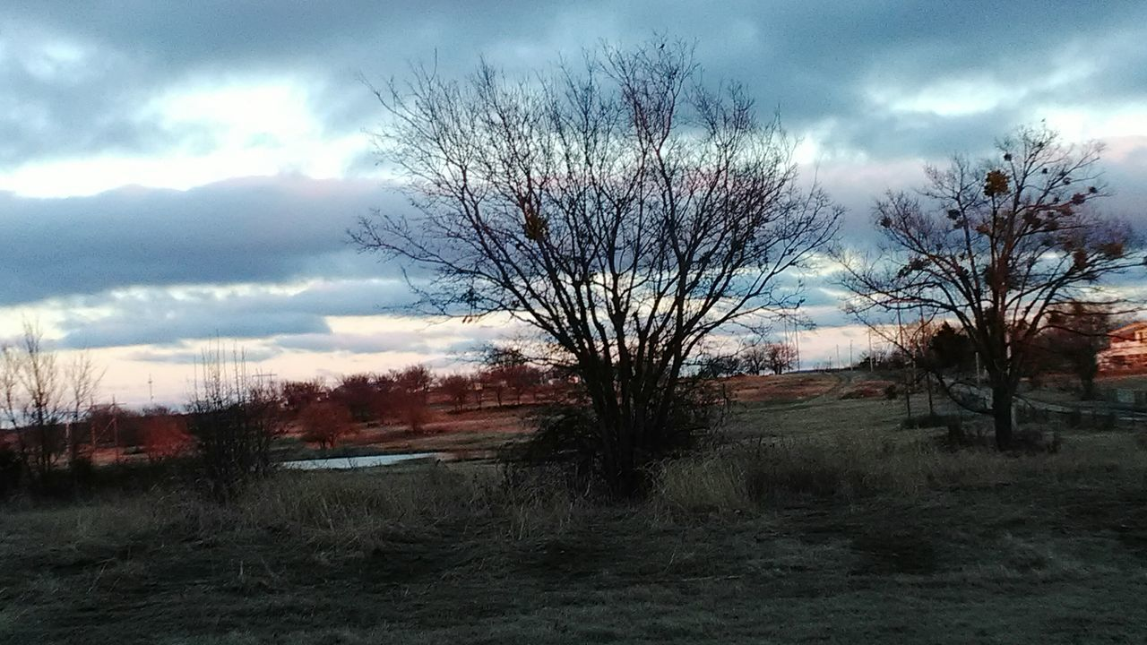 tree, bare tree, landscape, sky, tranquility, nature, cloud - sky, tranquil scene, beauty in nature, scenics, field, day, no people, outdoors, grass, lone, branch