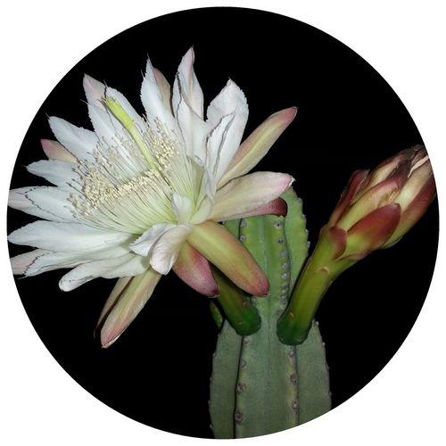 Cactus First Eyeem Photo