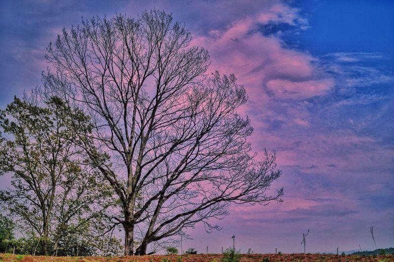 Pinky sky Sky