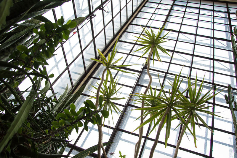 Architecture Built Structure Green Color Greenhouse Growth Indoors  Leaf Low Angle View No People Plant EyeEmNewHere Breathing Space