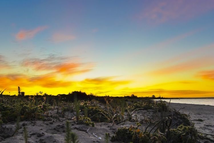 Sunset Beach Nature Sky Sea Scenics Beauty In Nature Tranquility Horizon Over Water Tranquil Scene Sand Outdoors Cloud - Sky No People Silhouette Water Marram Grass Landscape Grass Tree Paint The Town Yellow