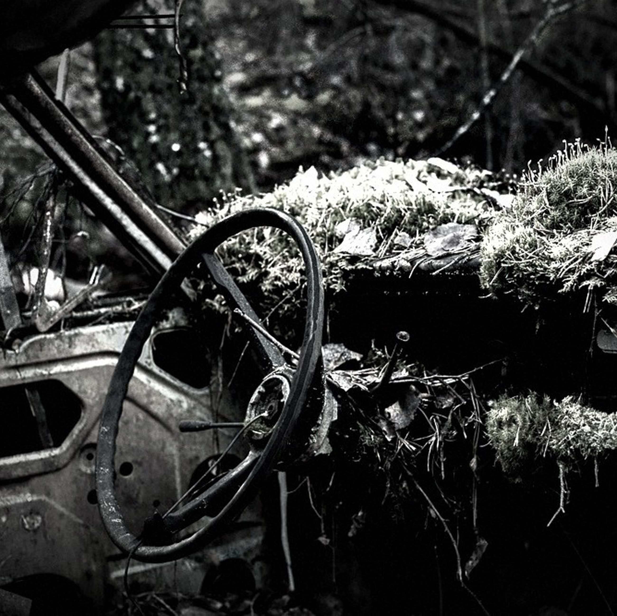 transportation, land vehicle, mode of transport, bicycle, plant, wheel, close-up, focus on foreground, growth, selective focus, stationary, outdoors, abandoned, field, grass, day, no people, part of, old, nature