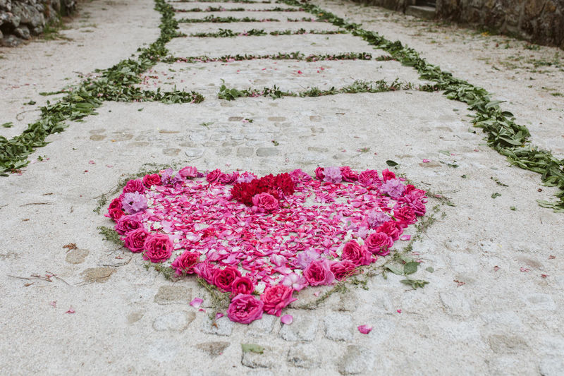 High angle view of pink flowers in heart shape on footpath