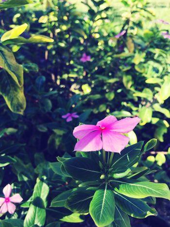 Hello World Taking Photos Flowers
