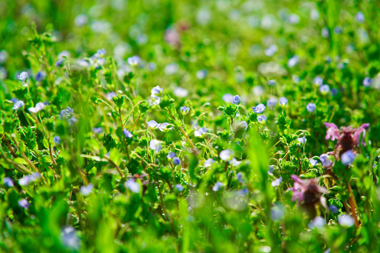 Flower Flowering Plant Plant Growth Freshness Beauty In Nature Fragility Green Color Vulnerability  Field Selective Focus Nature Land Beauty No People Environment Grass Outdoors Close-up Day Springtime Flower Head Flowerbed Bright